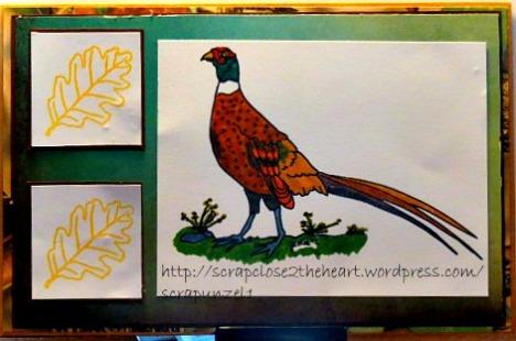 Pheasant--DS4J--LadyAnneSAG